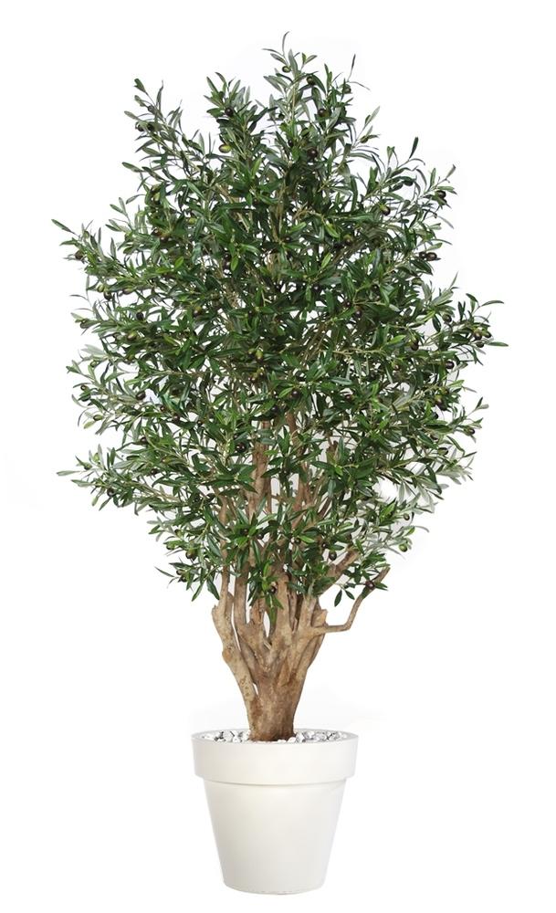Olive Malabar 180 cm Green